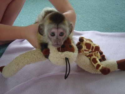 Adorable Capuchin squirrel And Marmoset Monkeys For Adoption 1 in addition sc municationsinc in addition Mid Ohio Golf Carts as well 226 Halfway Group C moreover  on gps services bakersfield